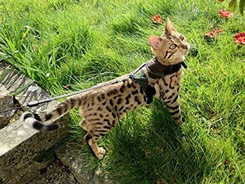 Cat Jacket Harness-Mynwood-Amazon