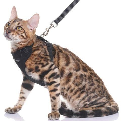 EXPAWLORER CH002BLK-M-01 Escape Proof Cat Harness