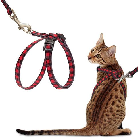 Figure 8 Cat Harness-PUPTECK-Amazon