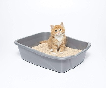 Multi-Cat Litter-sWheat Scoop-Amazon