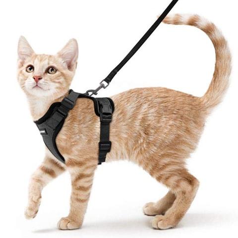 Vest Cat Harness-Rabbitgoo-Amazon