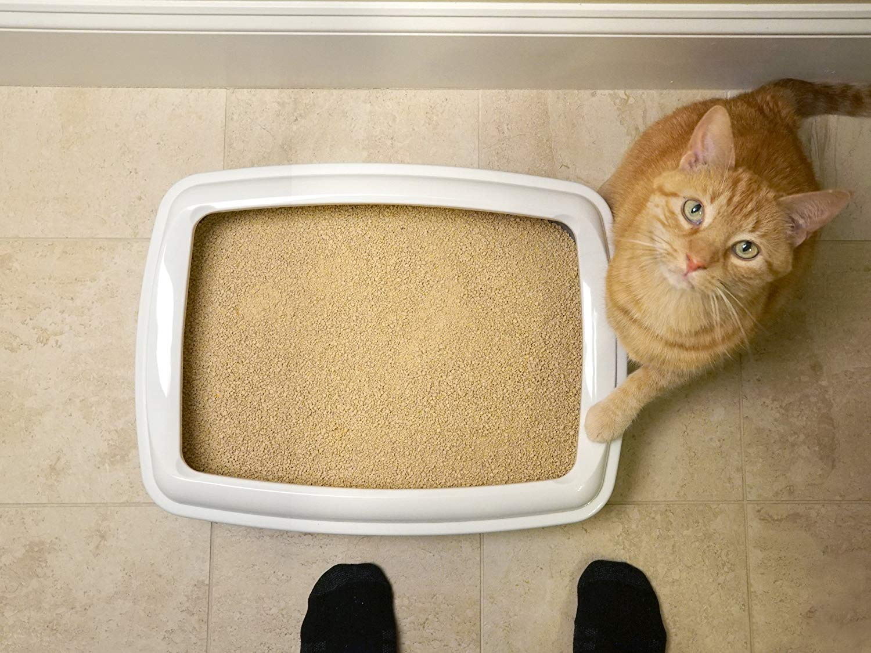 World's Best Cat Litter-Amazon