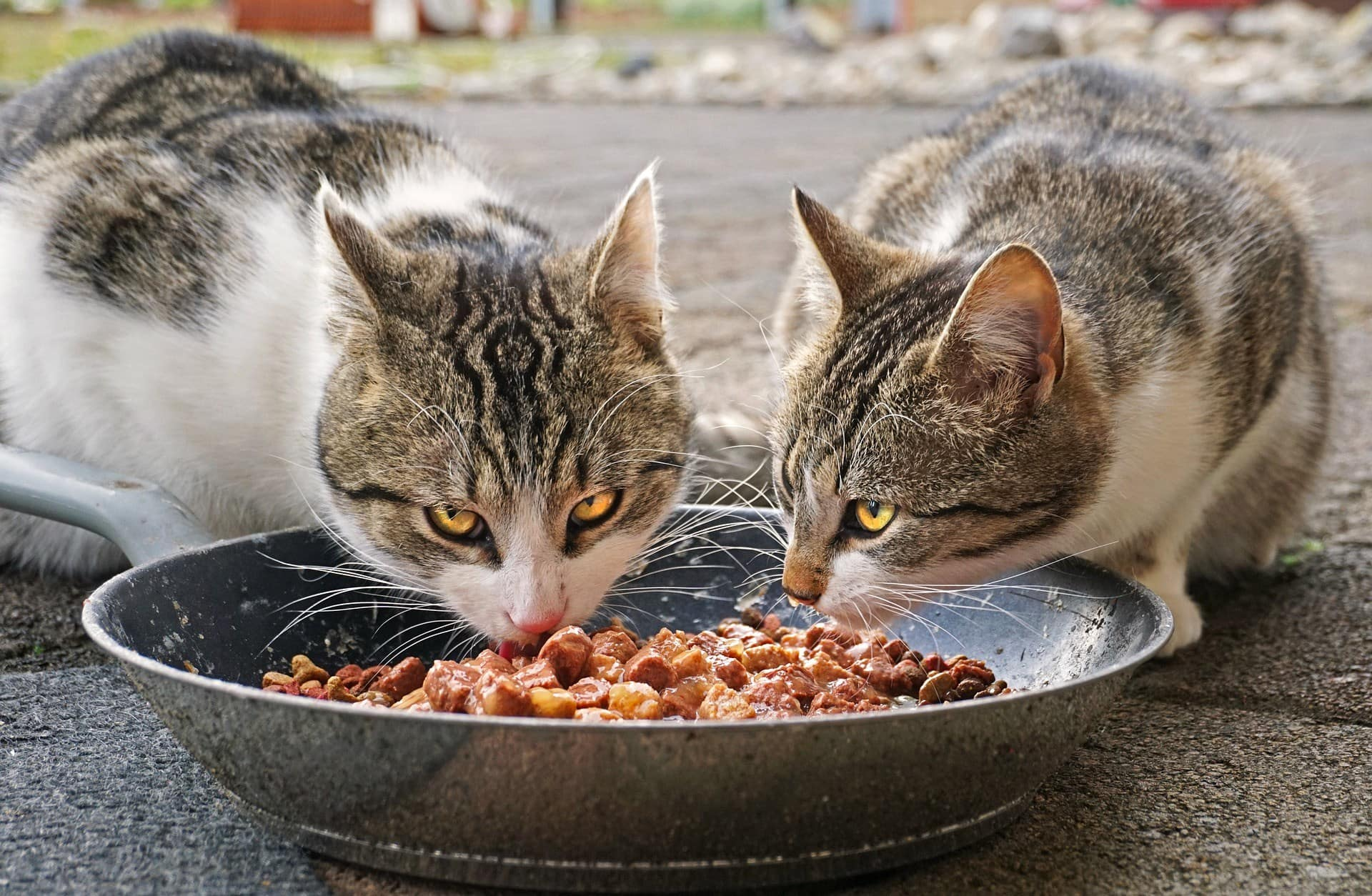 cats eating together