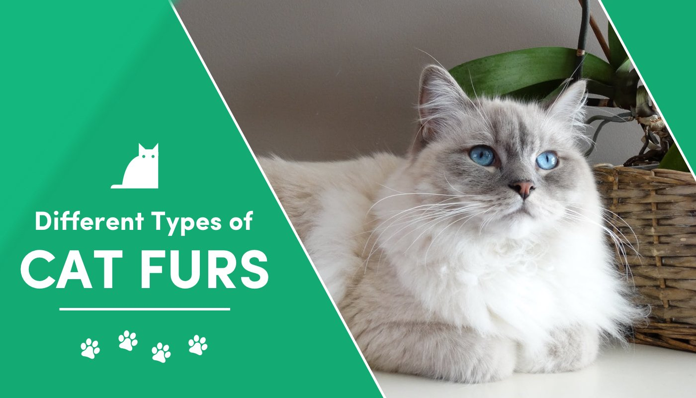 different types of cat fur