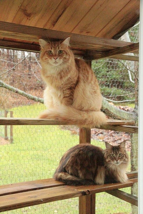 All-season Outdoor Cat Habitat by Instructables