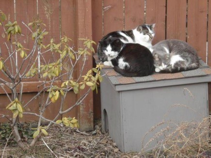 Cats In My Yard Heated Outdoor House