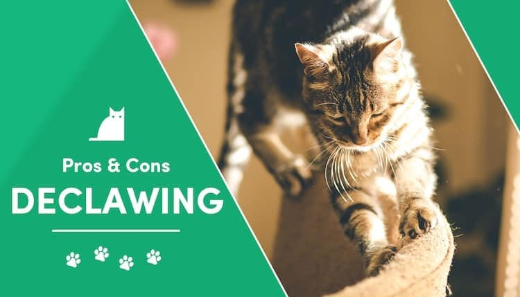 pros and cons of declawing