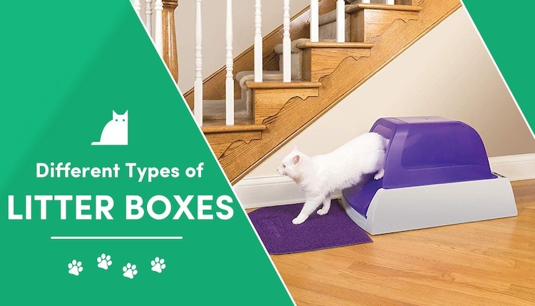 types of litter boxes
