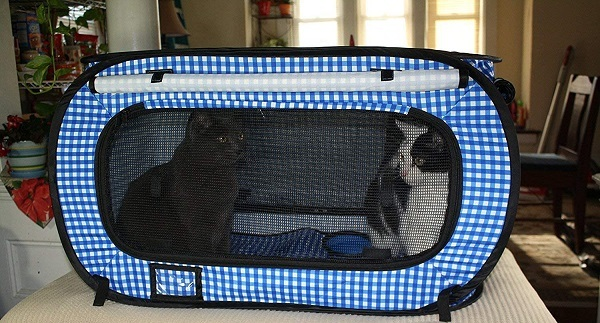 blue cat carrier