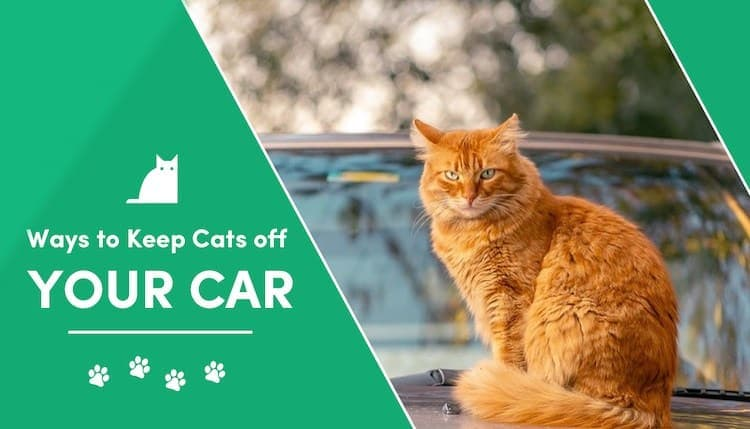 Simple Ways to Keep Cats Off Your Car