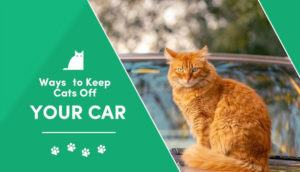 Ways-to-Keep-Cats-Off-Your-Car2