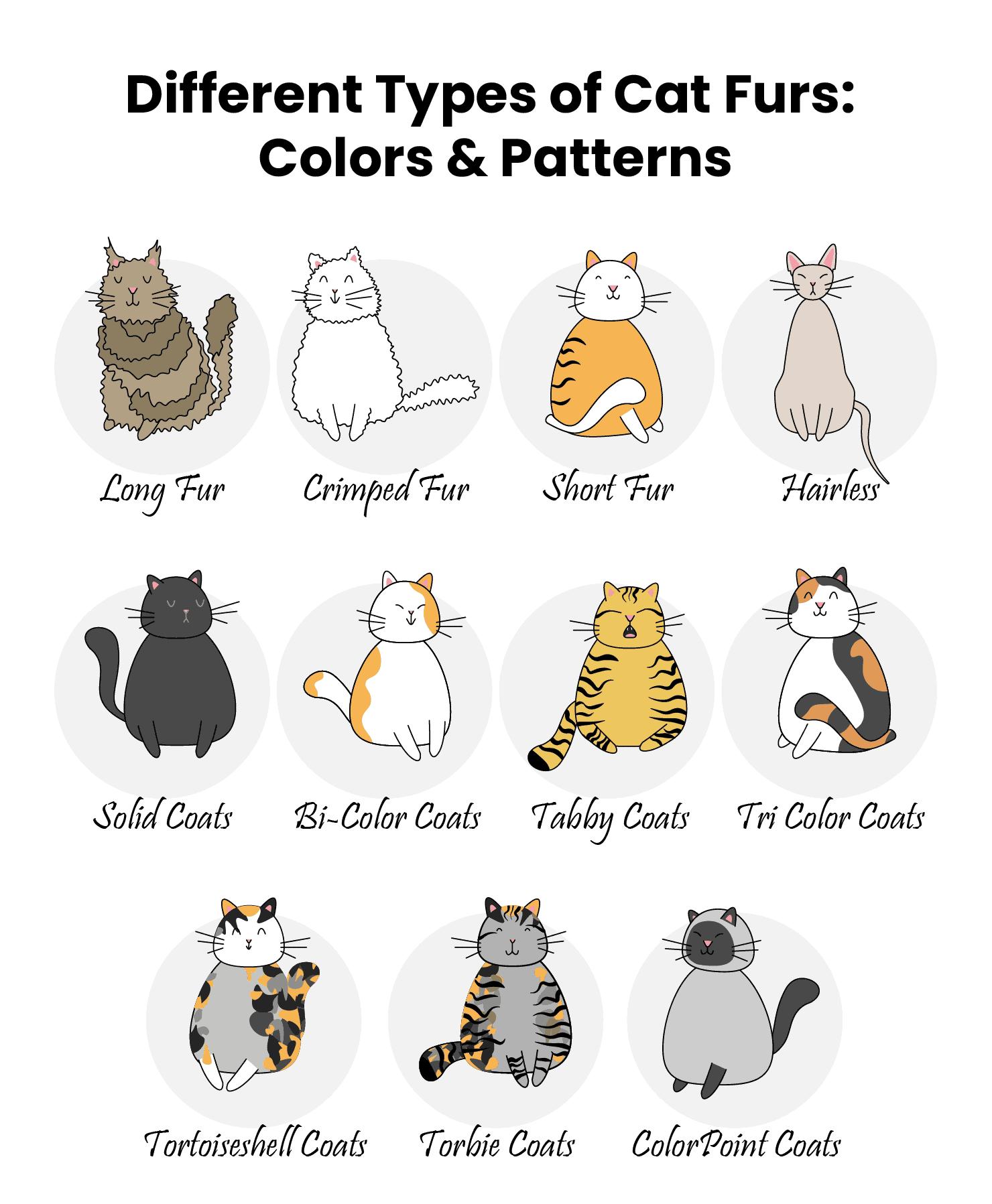 cat coat types