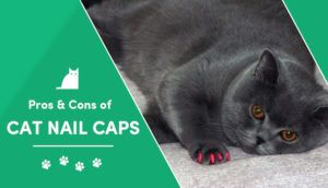 pros and cons cat nail caps