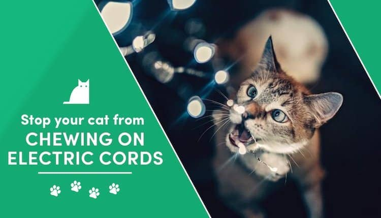 how to keep your cat from chewing on electric cords