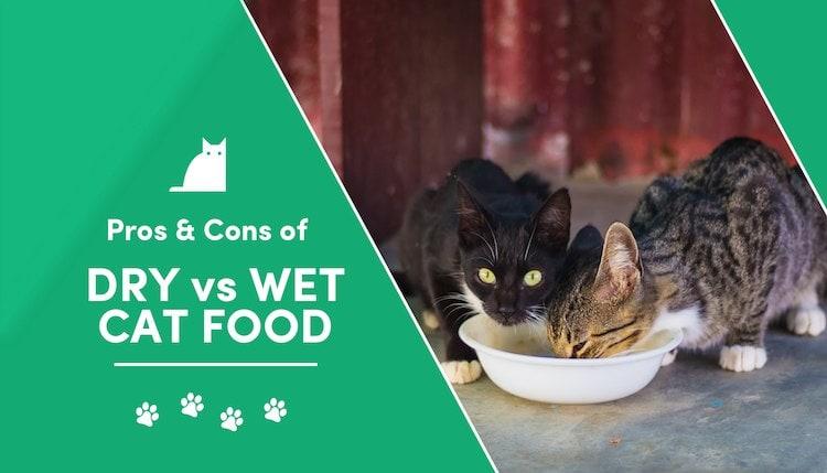 dry vs wet cat food