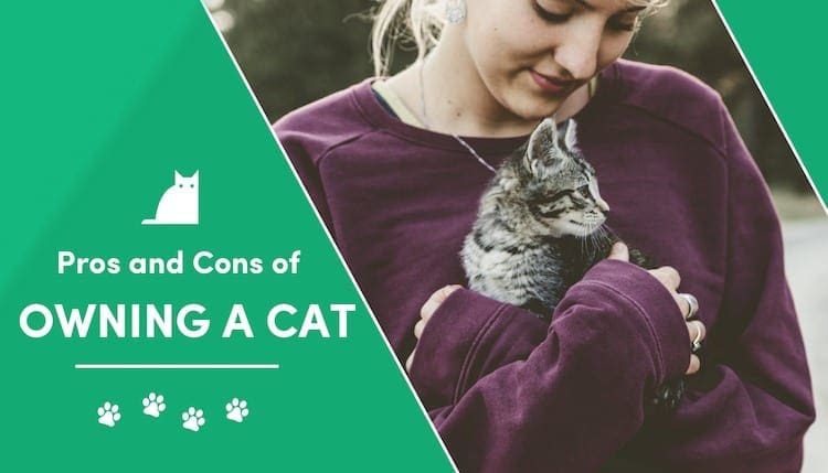 pros and cons of owning cat