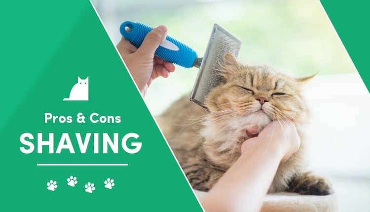 pros and cons of shaving your cat