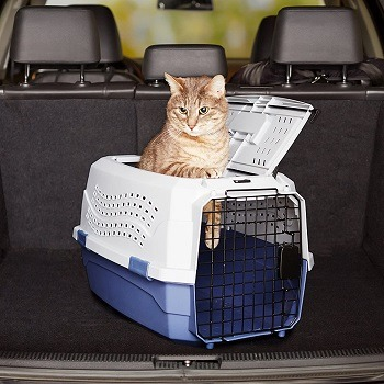 AmazonBasics Two-Door Top-Load Hard-Sided Pet Travel Carrier