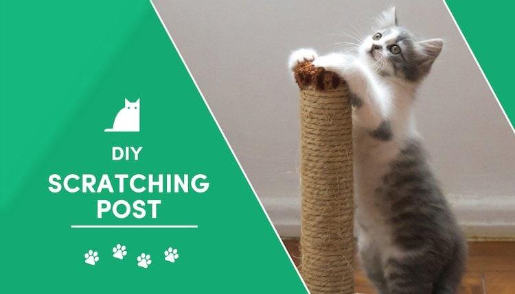 cat scratching post 2
