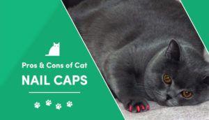 cat nail caps2