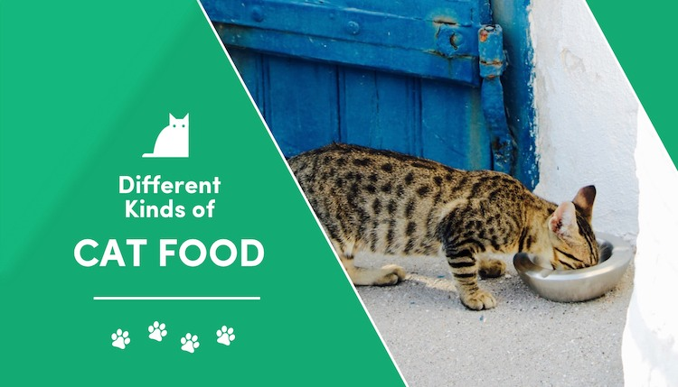 different kinds of cat food