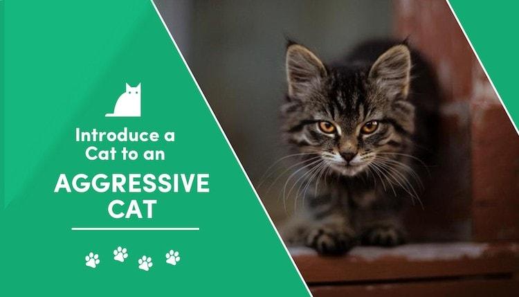 aggressive cat 2