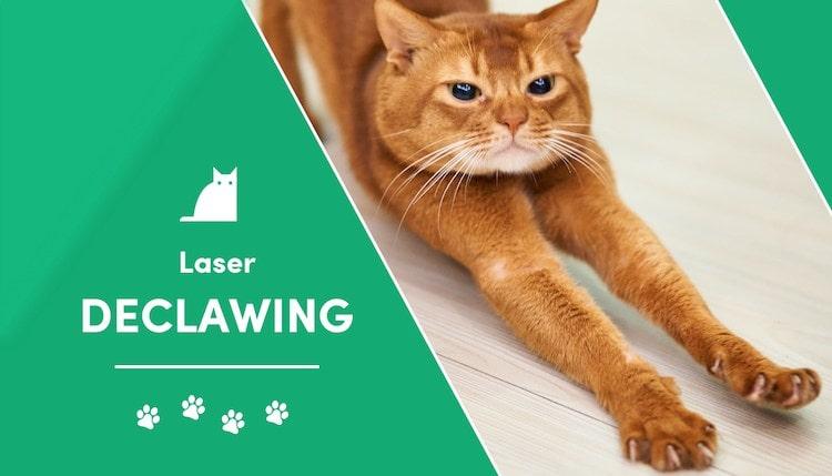 laser declawing