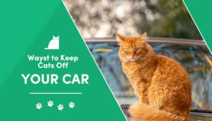 how to keep cat off car