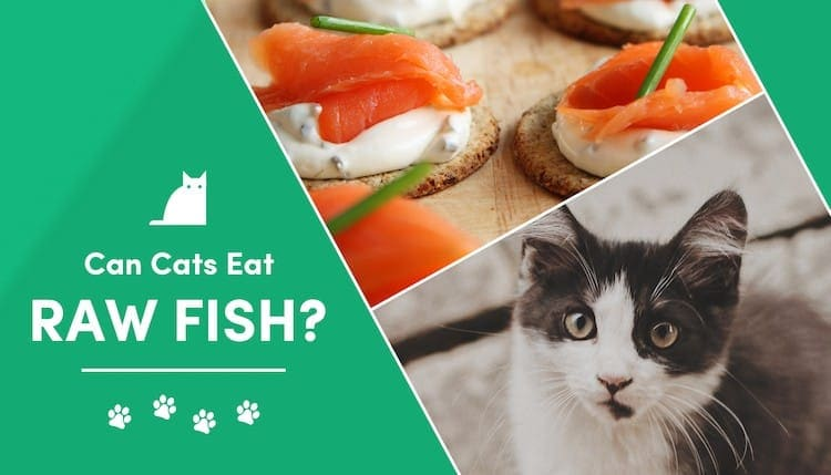can cats eat raw fish?
