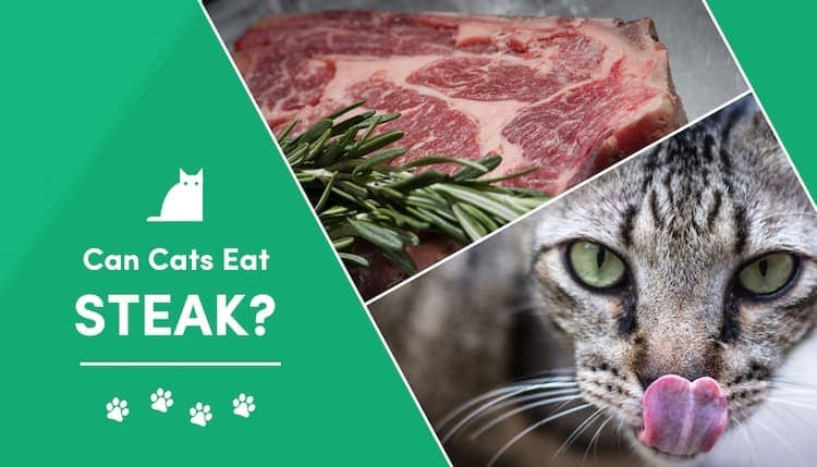 can cats eat steak?