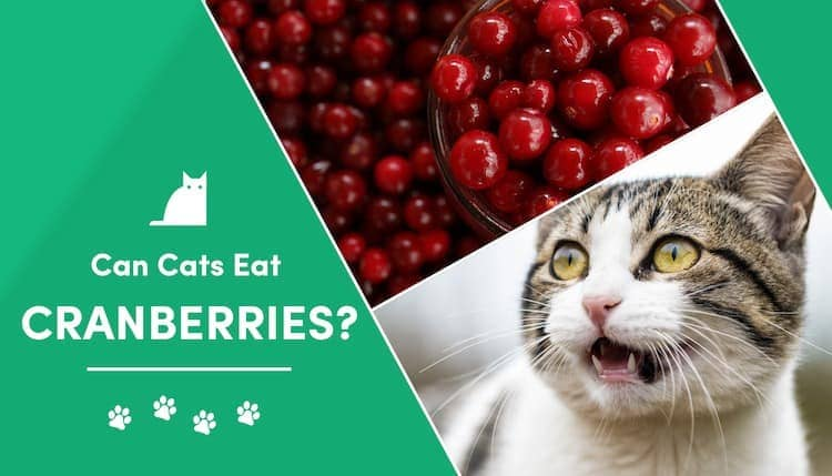 can cats eat cranberries