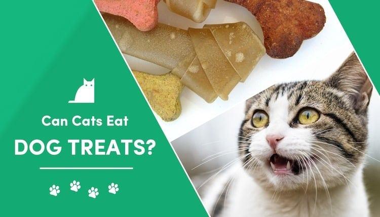 can cats eat dog treats