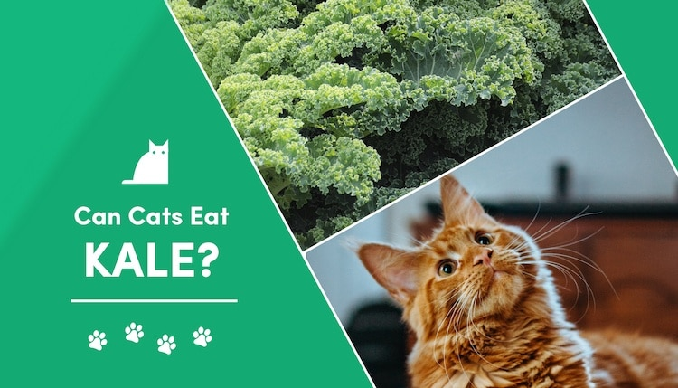 can cat eat kale