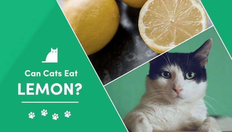 can cats eat lemon?