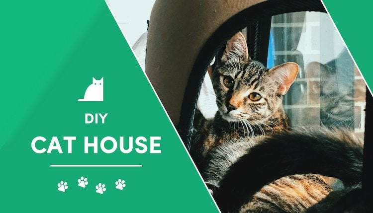 diy cat house 2