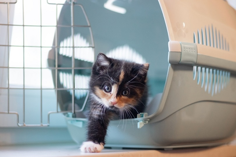 cat sits in a carrier_alenka2194_shutterstock