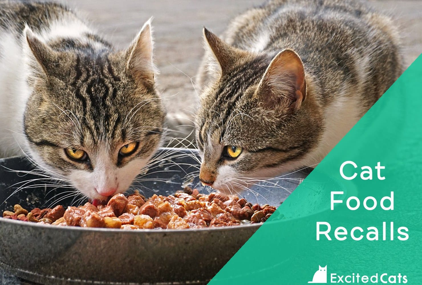 cat food recalls page