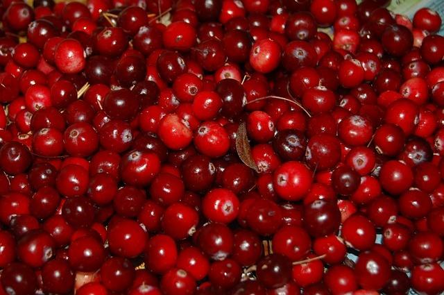 Can Cats Eat Cranberries