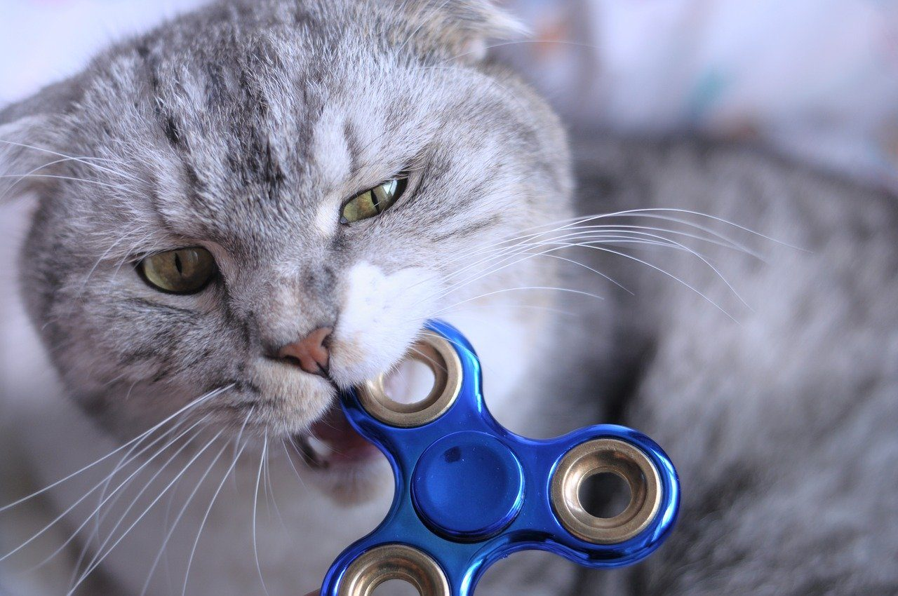 cat biting a fidget spinner