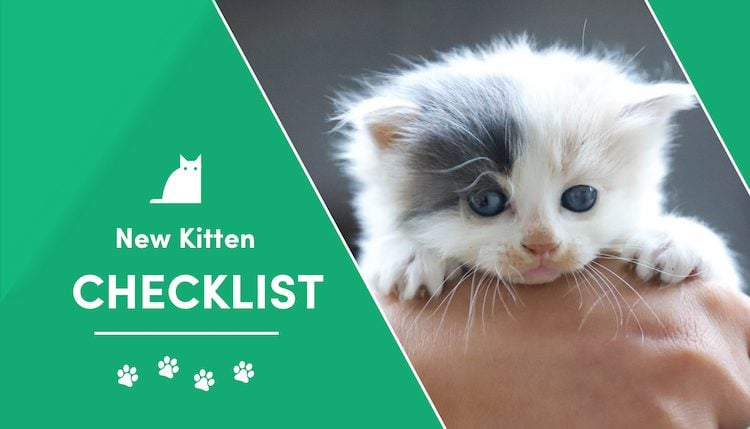 new kitten checklist 2