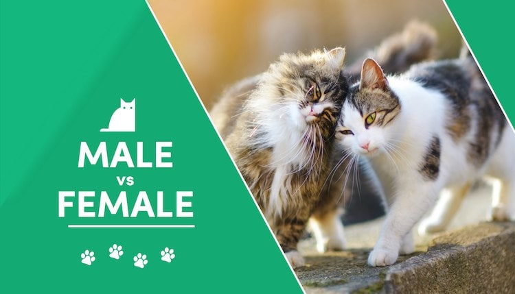 male vs female 2