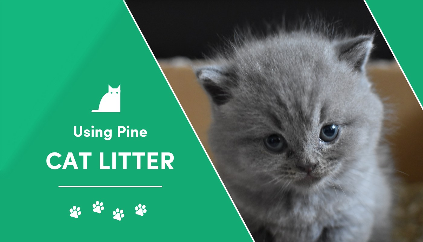 pros and cons pine litter
