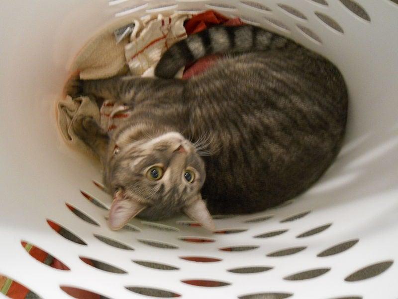 cat in laundry basket