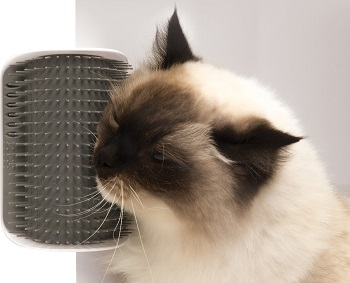 Best Brush for Short-Haired Cats