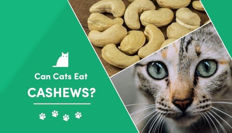 can cats eat cashews?