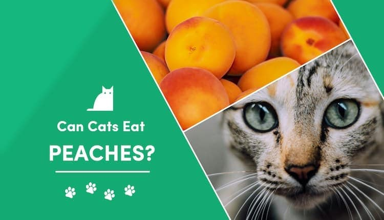 can cats eat peaches?