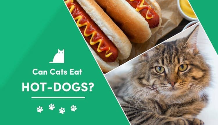 can cats eat hot dogs