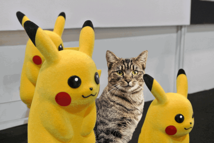 cat with pikachus