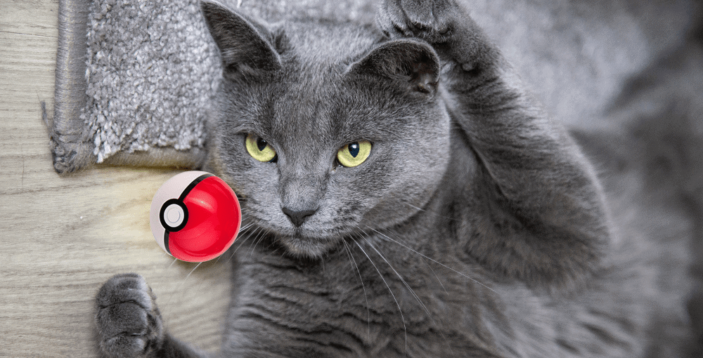 grey cat w/ poke ball