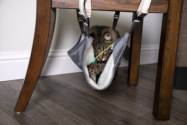 Cat under a chair hammock